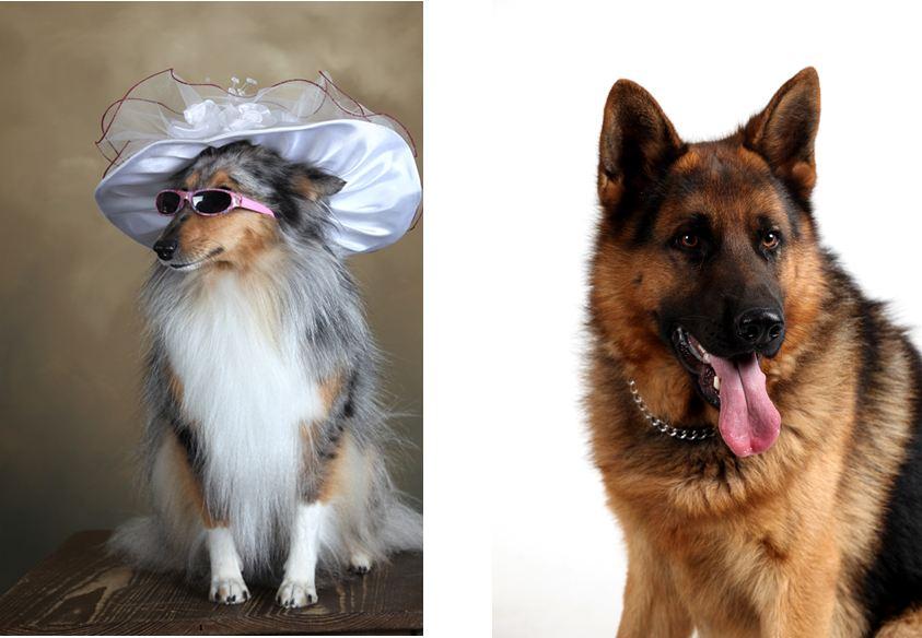 REVIN - Portraits de chiens : l'heure de la remise des prix (4/4)
