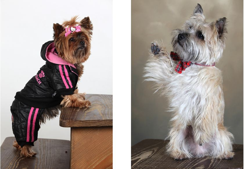 REVIN - Portraits de chiens : l'heure de la remise des prix (3/4)