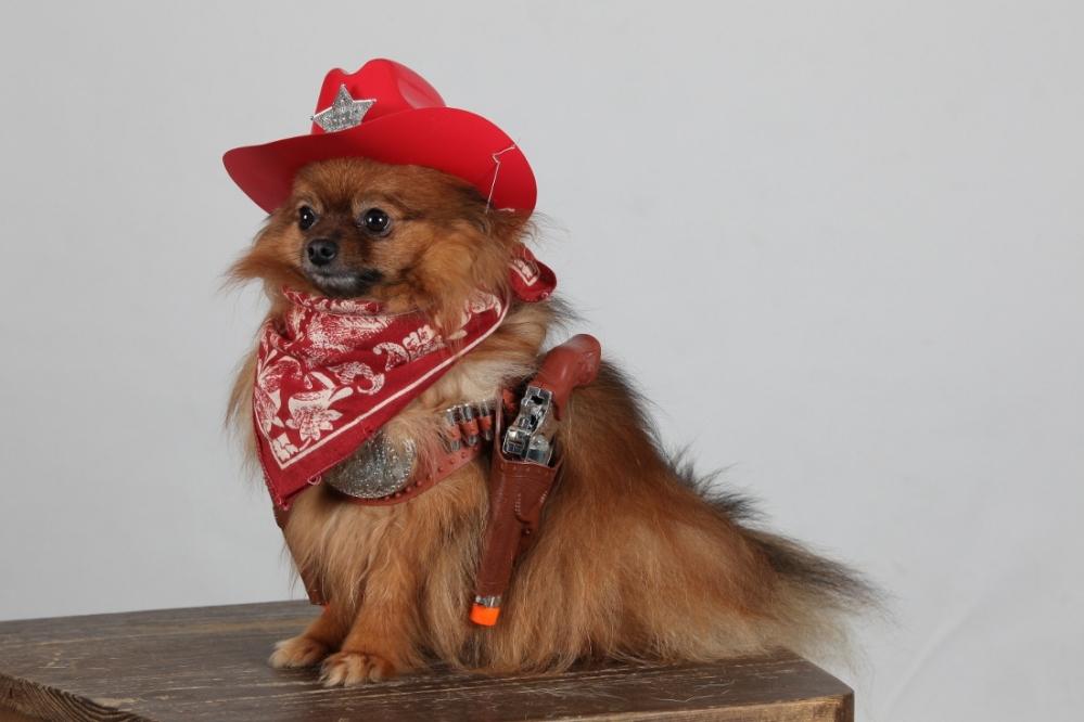 REVIN - Portraits de chiens : l'heure de la remise des prix (1/4)