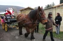 Ce superbe trait ardennais remplaçait les rennes traditionnels.